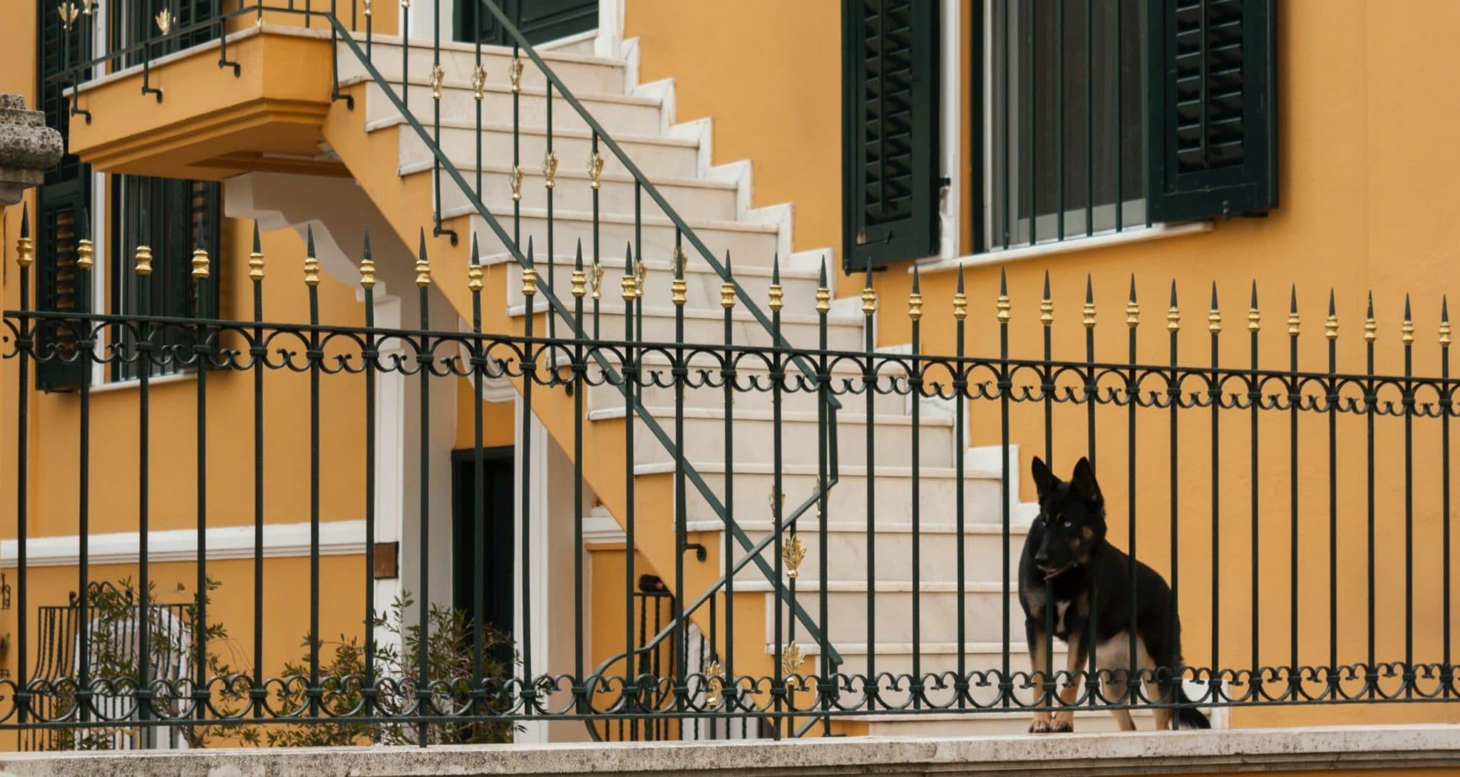 dog protecting house